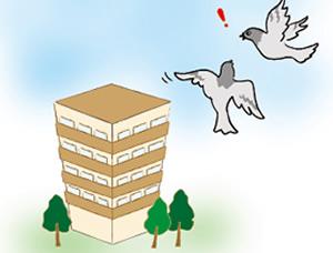 鳩被害レベル2 待機鳩