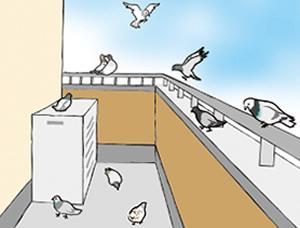 鳩被害レベル1 休憩鳩