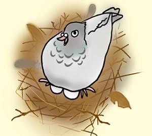 鳩被害レベル4 巣作り鳩