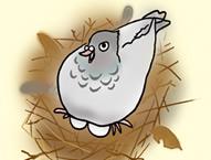 レベル4 巣作り鳩