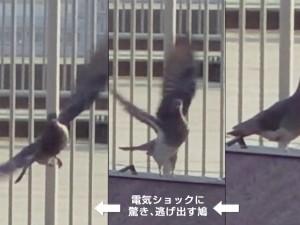 対策 カビキラー 鳩